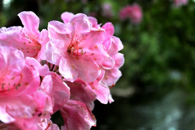 Crystal Springs Rhododendron Gardens | Kristi Does PDX