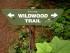 wildwood 1