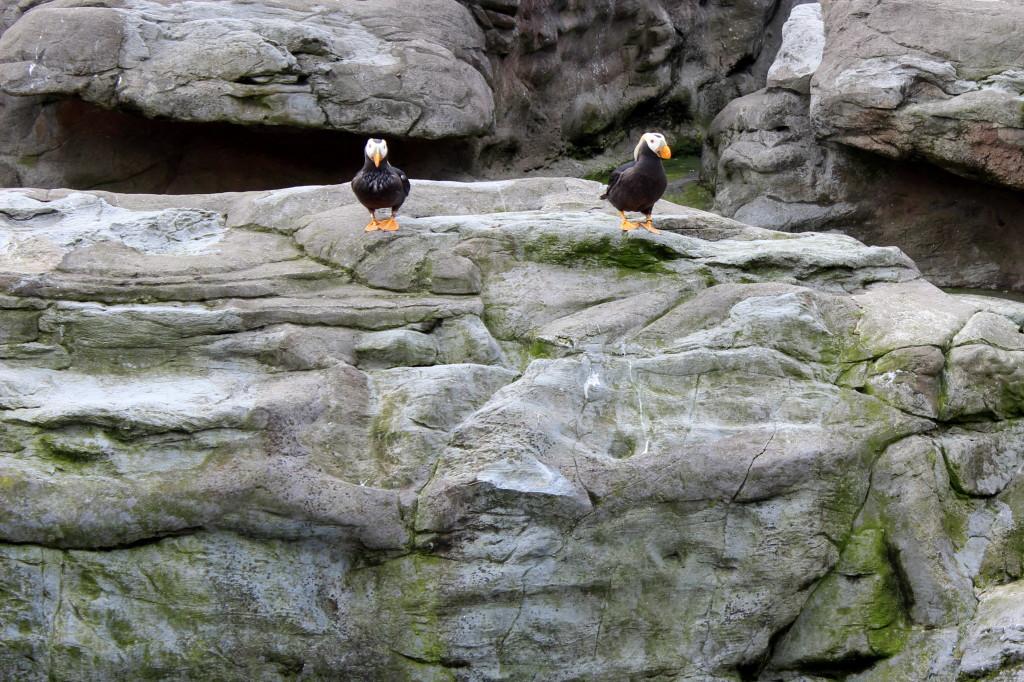 oregon coast aquarium puffin