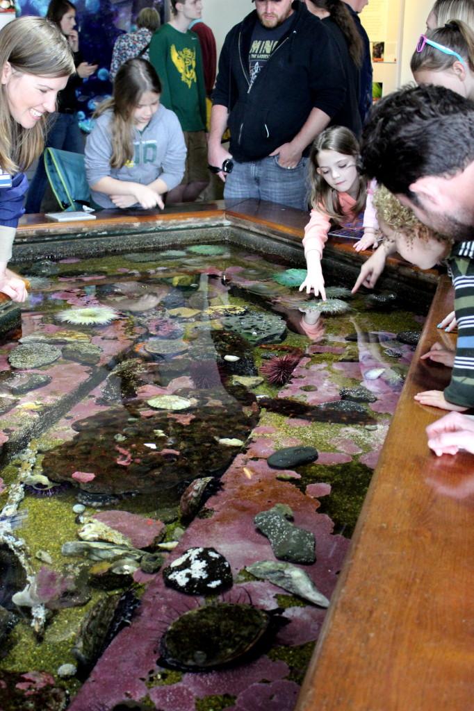 oregon coast aquarium tidepool