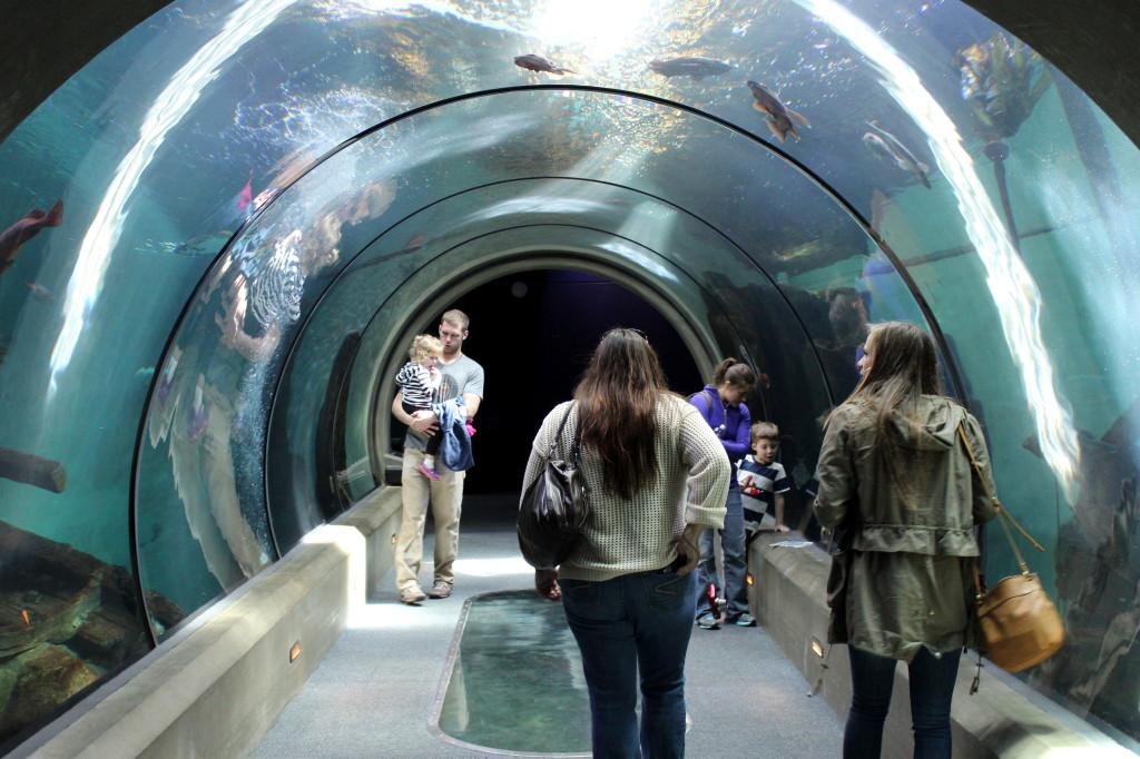 oregon coast aquarium passage
