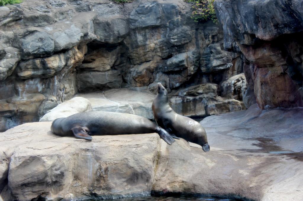 oregon coast aquarium sealons
