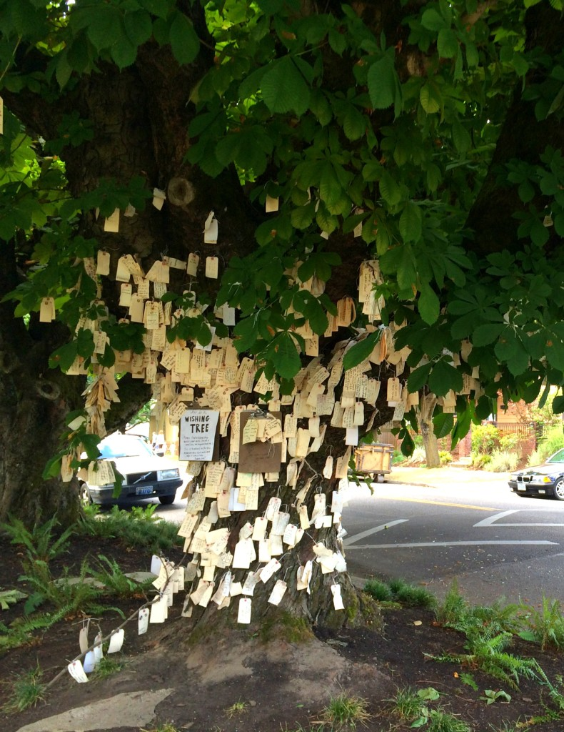 wishing tree 1