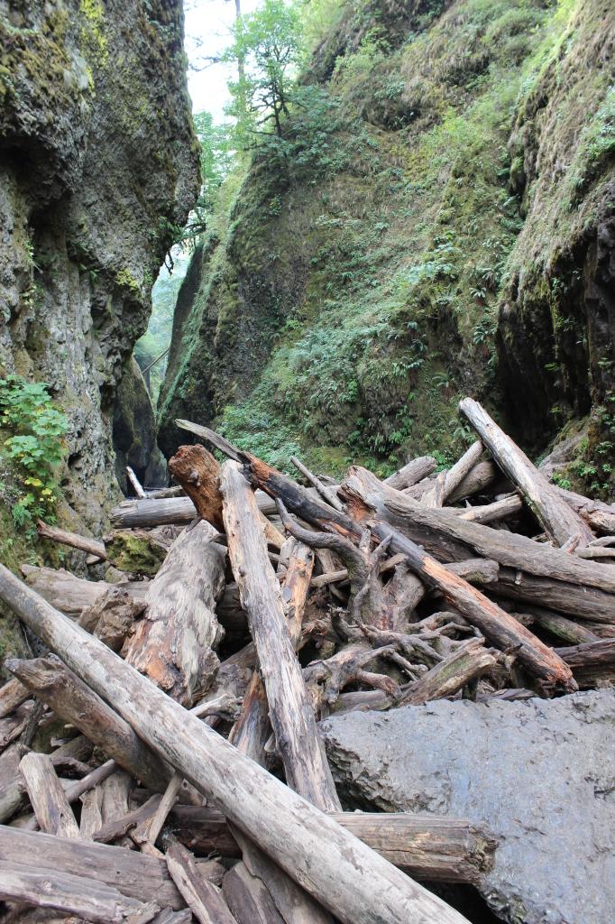 Oneonta Gorge 10