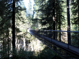 Drift Creek Falls 5