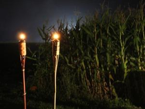 Kruger Corn Cabaret 6