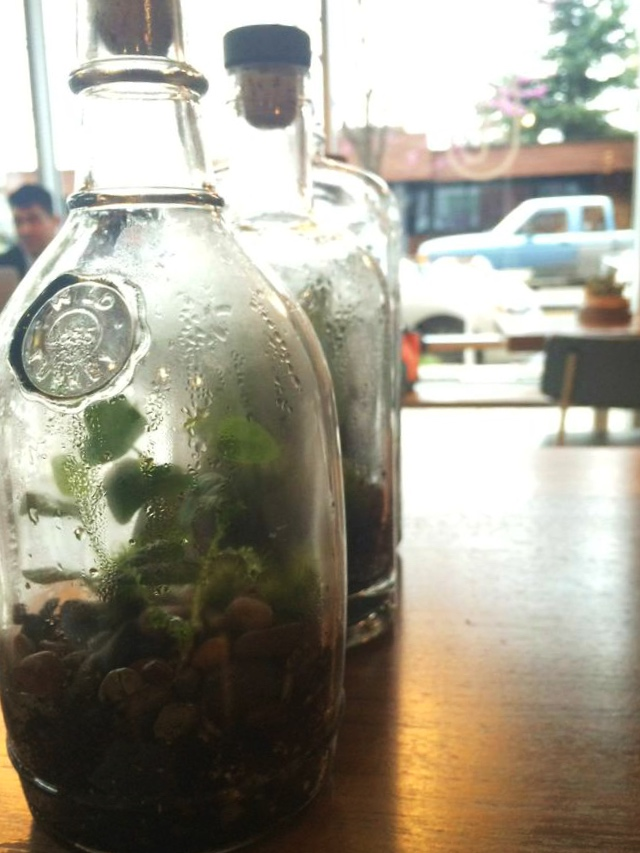 Good coffee terrarium