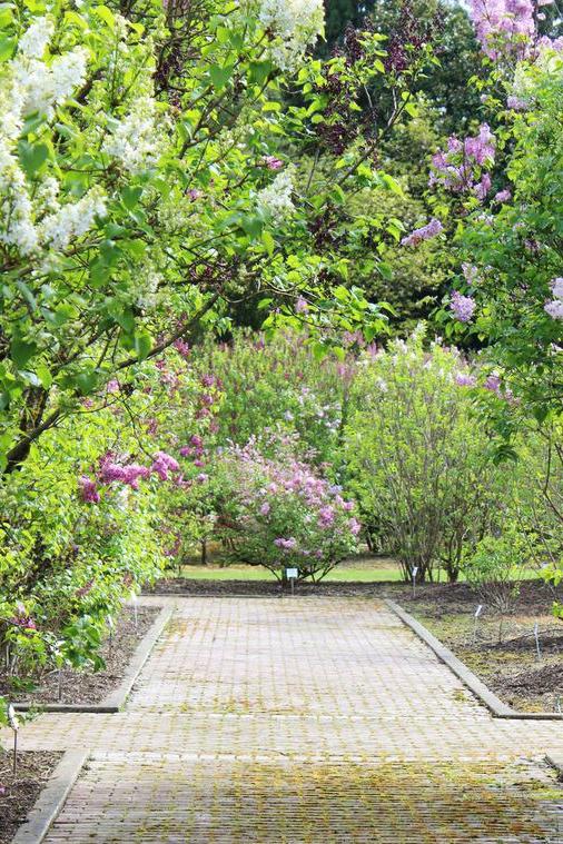 Lilac garden paths
