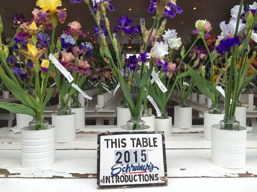 Iris garden 2015 new varieties
