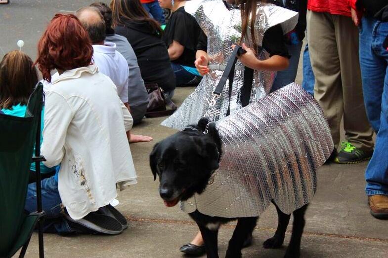 Ufofest silver dog