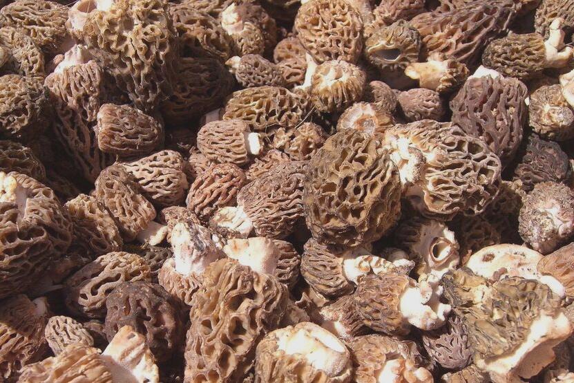 Local Food Mushrooms