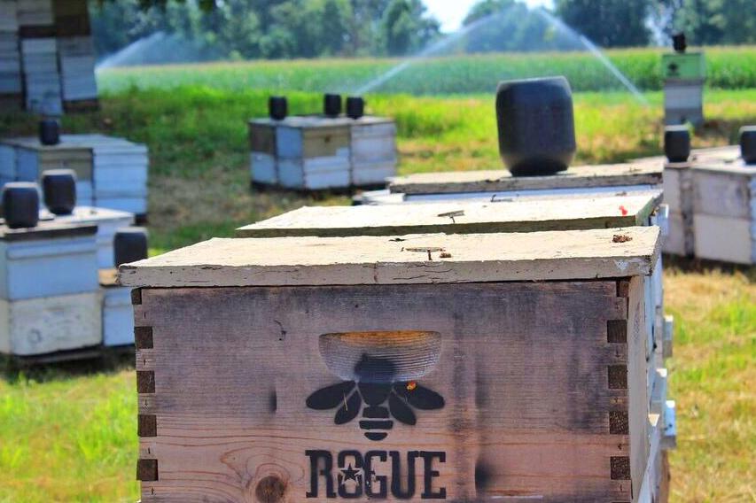 Rogue farms bees