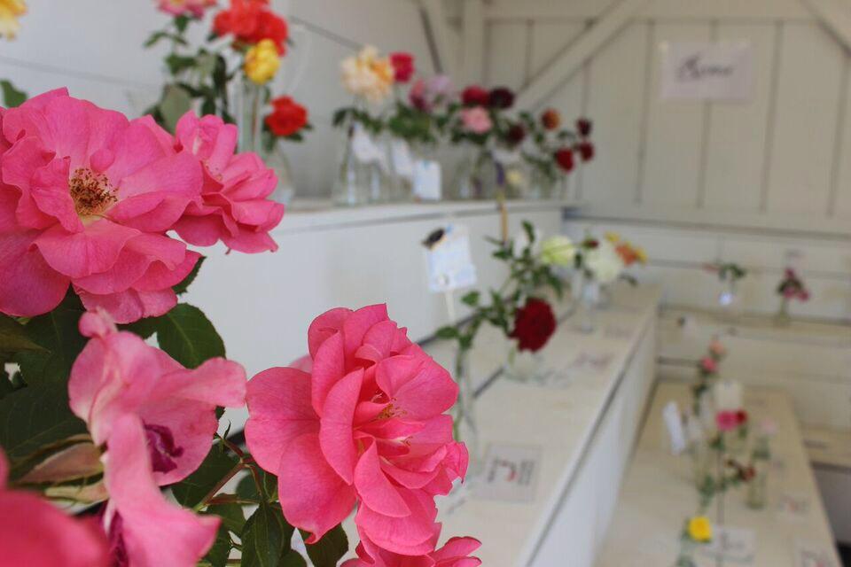 Clackamas Fair roses
