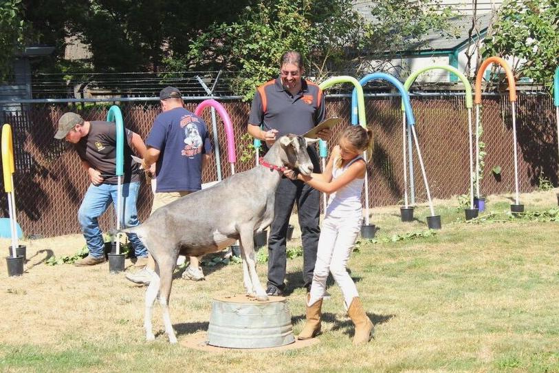 Clackamas fair goat agility