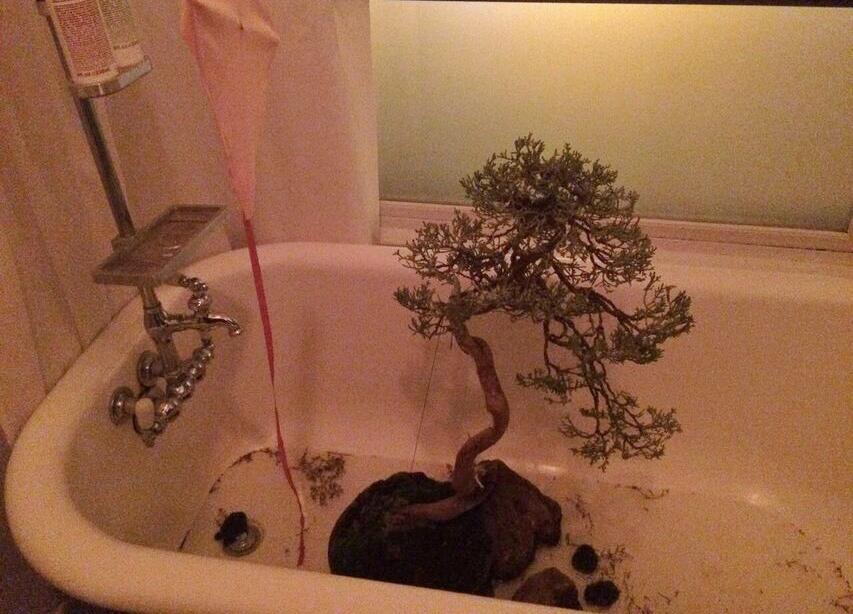 Content2015 bonsai bathtub