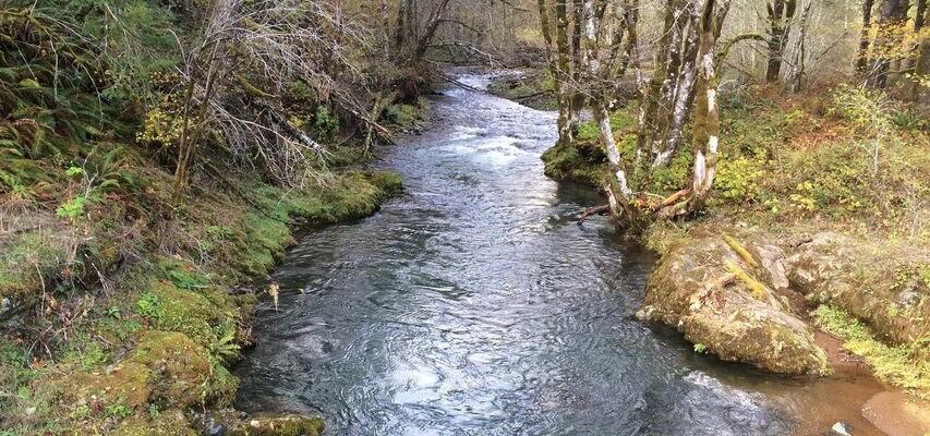 Wilson River creek