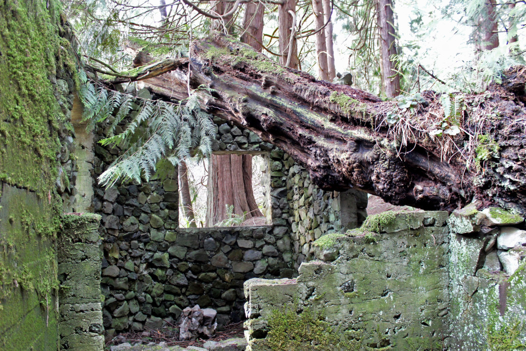 skamania stone house tree down