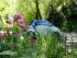 Parkdale Daytrip Car2Go flowers