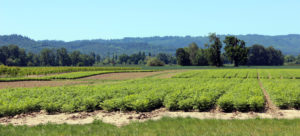 Sauvie Island Bike Ride Farm View