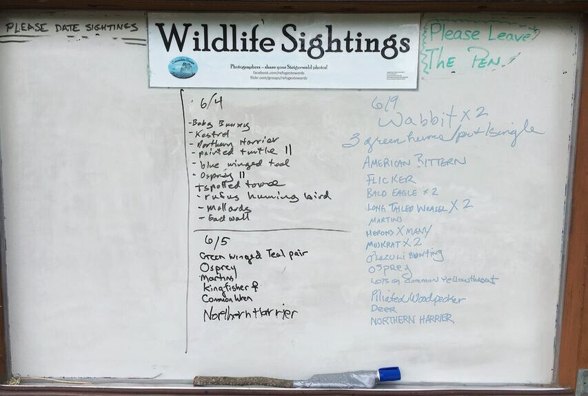 Steigerwald wildlife sightings
