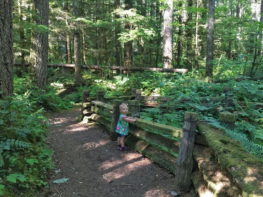 Lewis River Falls baby fence