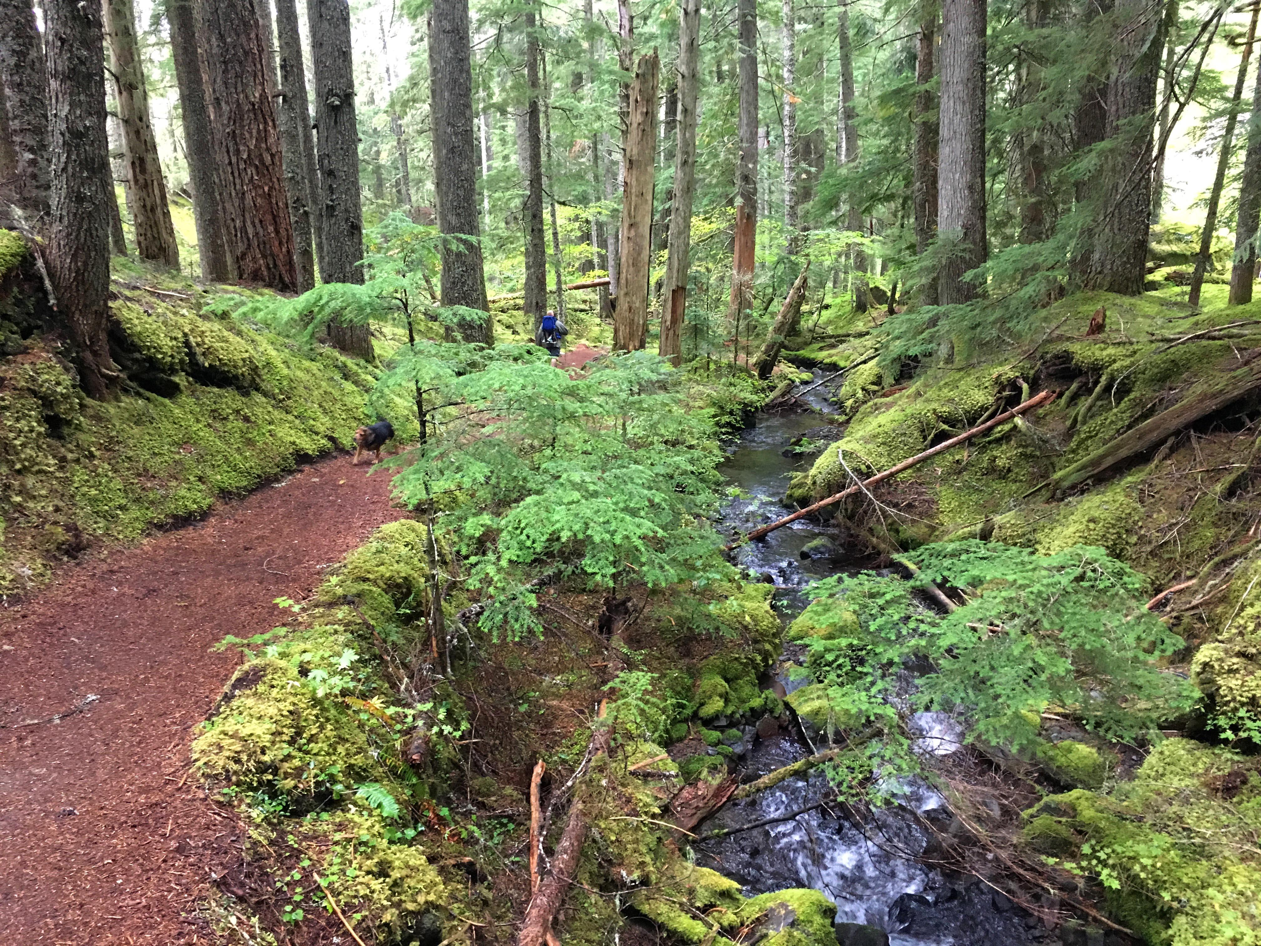ramona-falls-exit-trail
